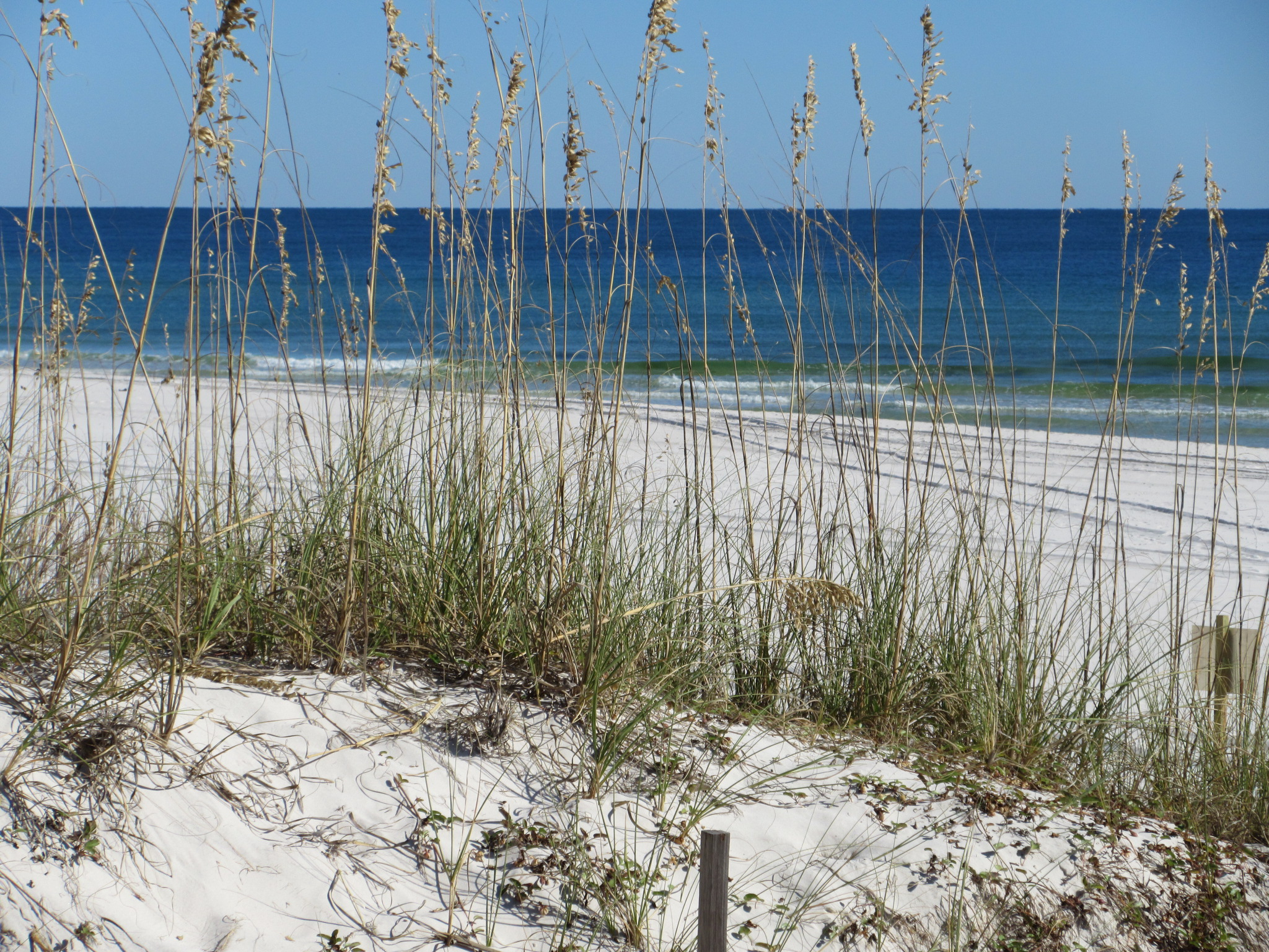 Thursday, January 28, 2016 4:00 PM – 6:00 PM Orange Beach Community Center 4849 S. Wilson Blvd. Orange Beach, AL 36561 You're invited to the Master Plan Reveal Open House on January 28, 2016, from 4:00 PM to 6:00 PM, at the Orange Beach Community Center. Come learn about what projects are being planned for all to enjoy, including visitor experience enhancements, dune restoration, building an environmental information center, creating a research and education center and rebuilding the Lodge. Open House No. 4 will reveal a multi-year master plan for Gulf State Park based on feedback received during the previous open houses and by more than 2,600 individuals through an online survey. Please join us for this culminating session of more than one year of public planning. Be sure to mark your calendar and attend the Master Plan Reveal Open House